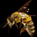 Jasa Pembasmi Lebah Lebah dan Tawon dari satu sisi memberi keuntungan dan manfaat kesehatan untuk manusia, namun disisi lain lebah juga bisa membahayakan manusia dari sengatan bisa mereka.